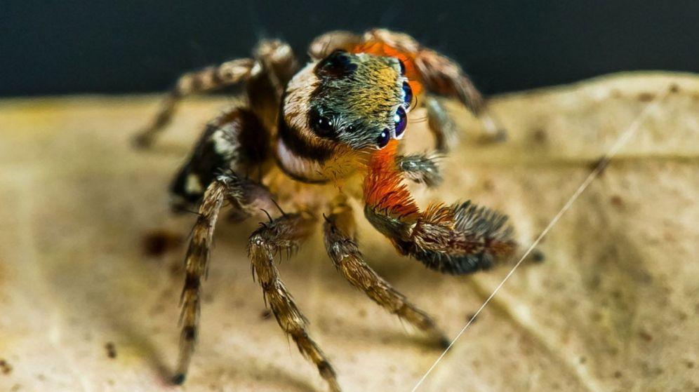 Foto: Algunas especies de arañas se vuelven más agresivas después de fenómenos climáticos extremos