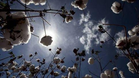 Las tres pruebas del algodón para la rentabilidad