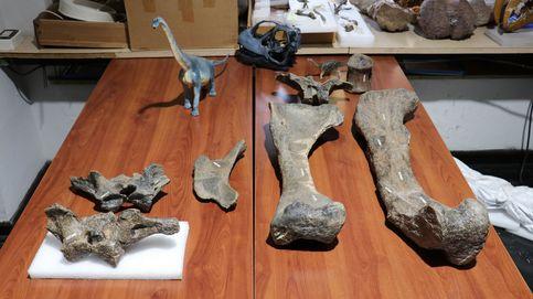 Arackar licanantay, el dinosaurio más grande descubierto en Chile
