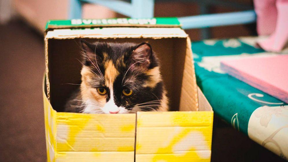 Foto: ¿El gato de Schrödinger? (Foto: Pixabay)