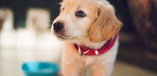 Post de Cuidas tu dieta, pero ¿y la de tu perro? Descubre la dieta BARF