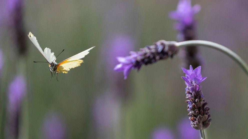 Los insectos del planeta están en peligro (y hemos subestimado el riesgo que supone)