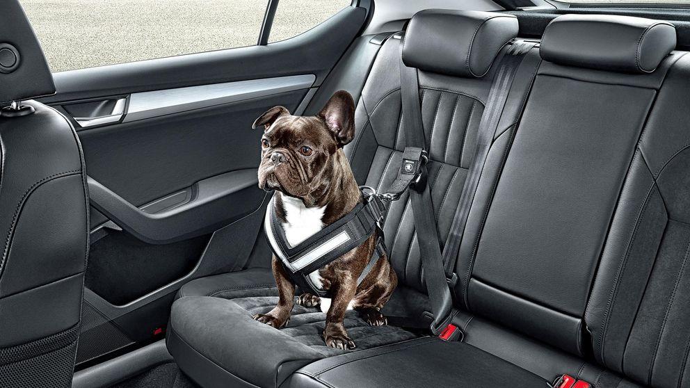 Cómo viajar con mascotas en el coche