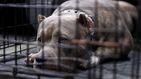 3 pitbulls atacan a una mujer que paseaba con sus dos perros y matan a uno de ellos