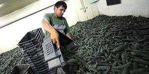 La UE aprueba 210 millones de ayudas a los agricultores pese al rechazo de España