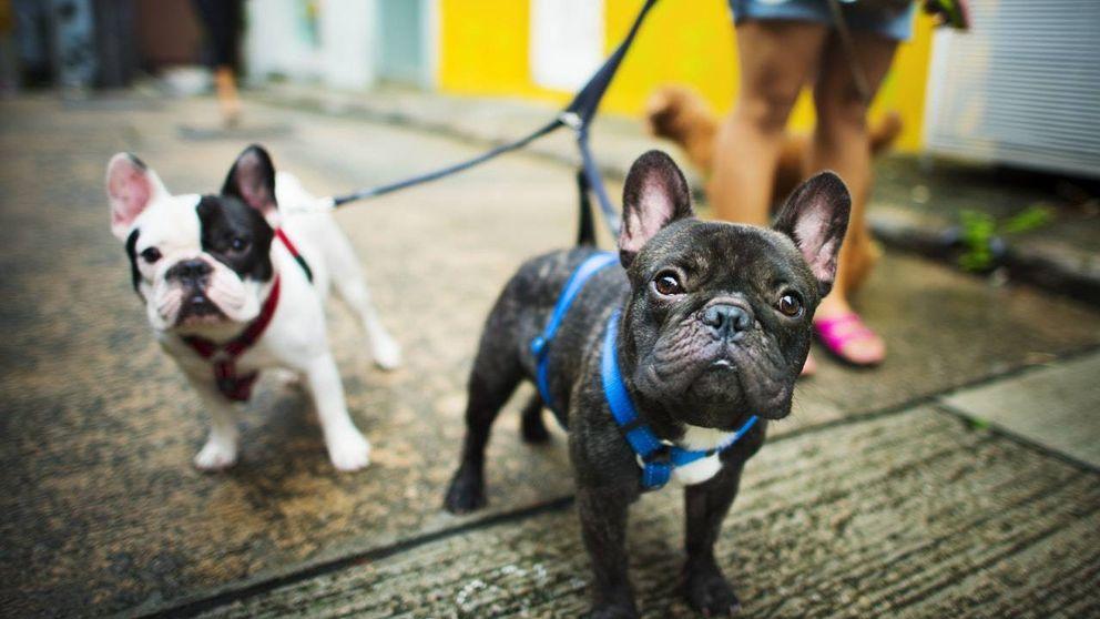 Los dueños de perros de L'Hospitalet, a limpiar las micciones de sus mascotas