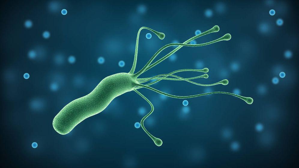 Bacteria helicobacter pylori dieta alimenticia