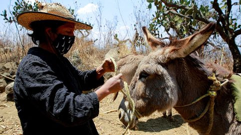 La mujeres cuidan de los burros en México