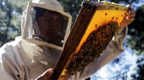 La miel gana peso como sustento económico en México