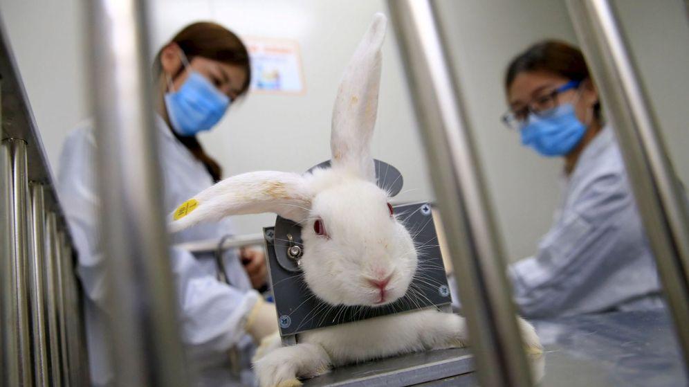 Foto: Investigadoras chinas toman la temperatura a un conejo. (Reuters)