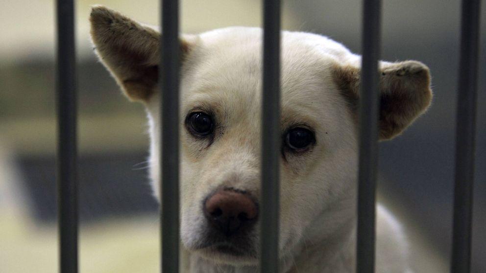 Alemania prohíbe adoptar perros de los refugios de animales en Navidad