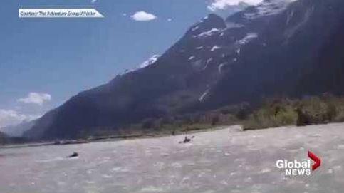 Un joven oso intenta cazar a un piragüista en Canadá