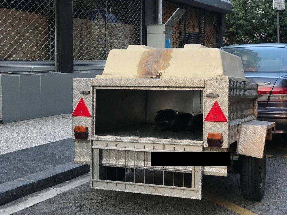 Foto: Varios bonitos transportados en el remolque para perros. (Ayuntamiento de Vitoria)