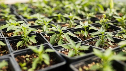 Invernaderos para cultivar huertos durante el invierno