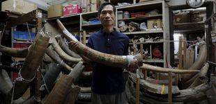 Post de Tras el marfil prohibido en China: la última bala para que los elefantes no se extingan
