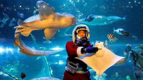 Navidad en el acuario de Tokio y 'slackline' en la playa de Ipanema: el día en fotos