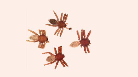 Descubre 4 especies de arañas y les pone el nombre de estrellas del heavy metal