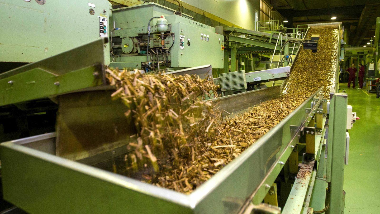 Foto: Proceso de fabricación de tabaco en la empresa Altadis en La Rioja. (EFE)
