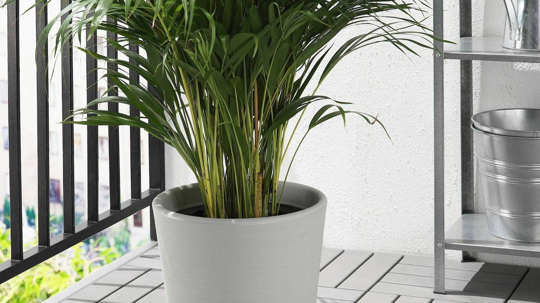 Una planta grande necesita un macetero más grande, como este de Ikea. (Cortesía)