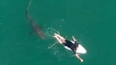 Un surfista recibe la visita de un gran tiburón blanco y se salva por los pelos