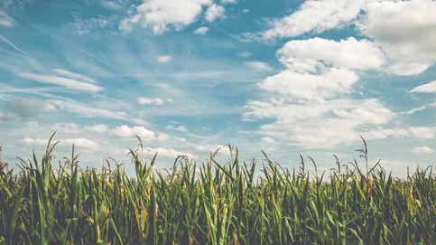 Láseres y placas solares para reducir el uso de pesticidas en el campo