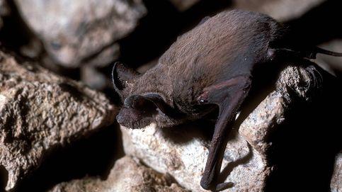 Murciélagos, tortugas y escarabajos: los animales más rápidos del planeta