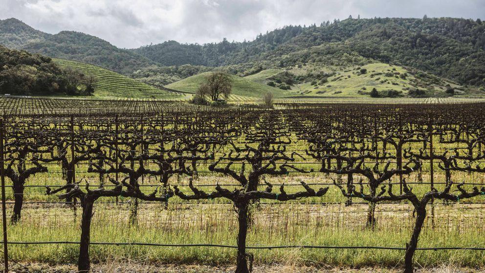 El Silicon Valley del vino: el gran negocio vinícola de Estados Unidos
