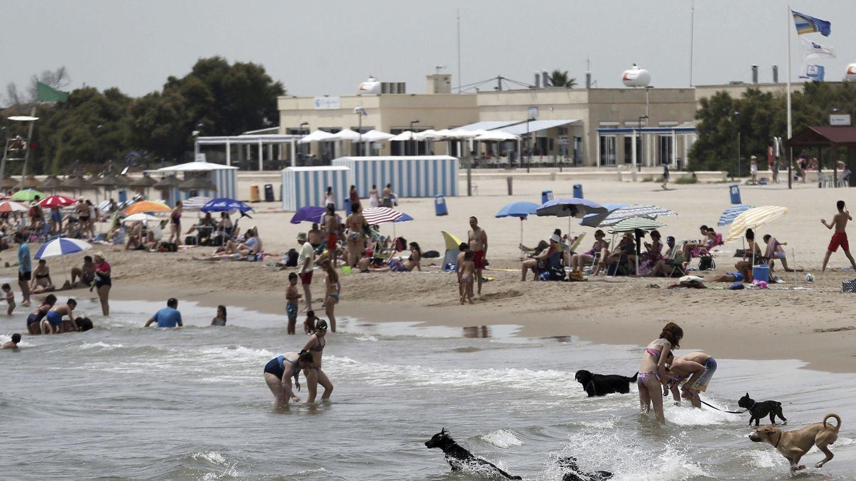 Imagen de la playa para perros en Pinedo. (Valencia)