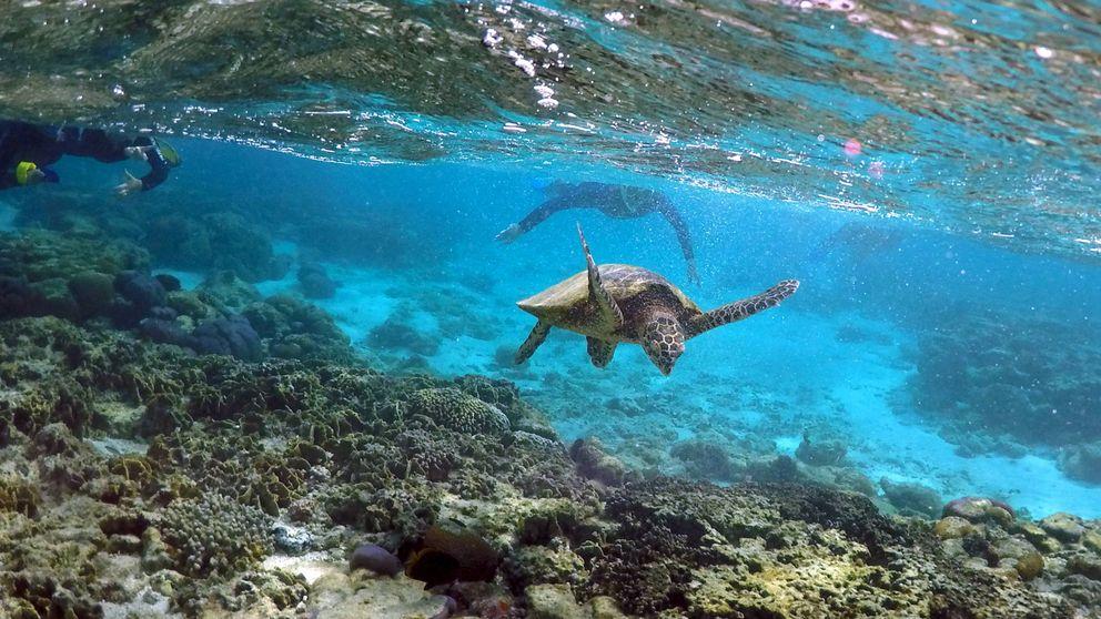 Las altas temperaturas amenazan a la gran barrera de coral