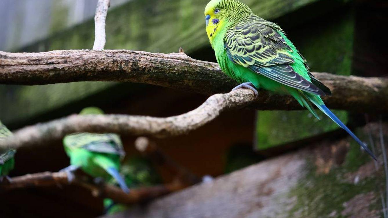 Pajareras y jaulas para pájaros dónde podrán comer y descansar