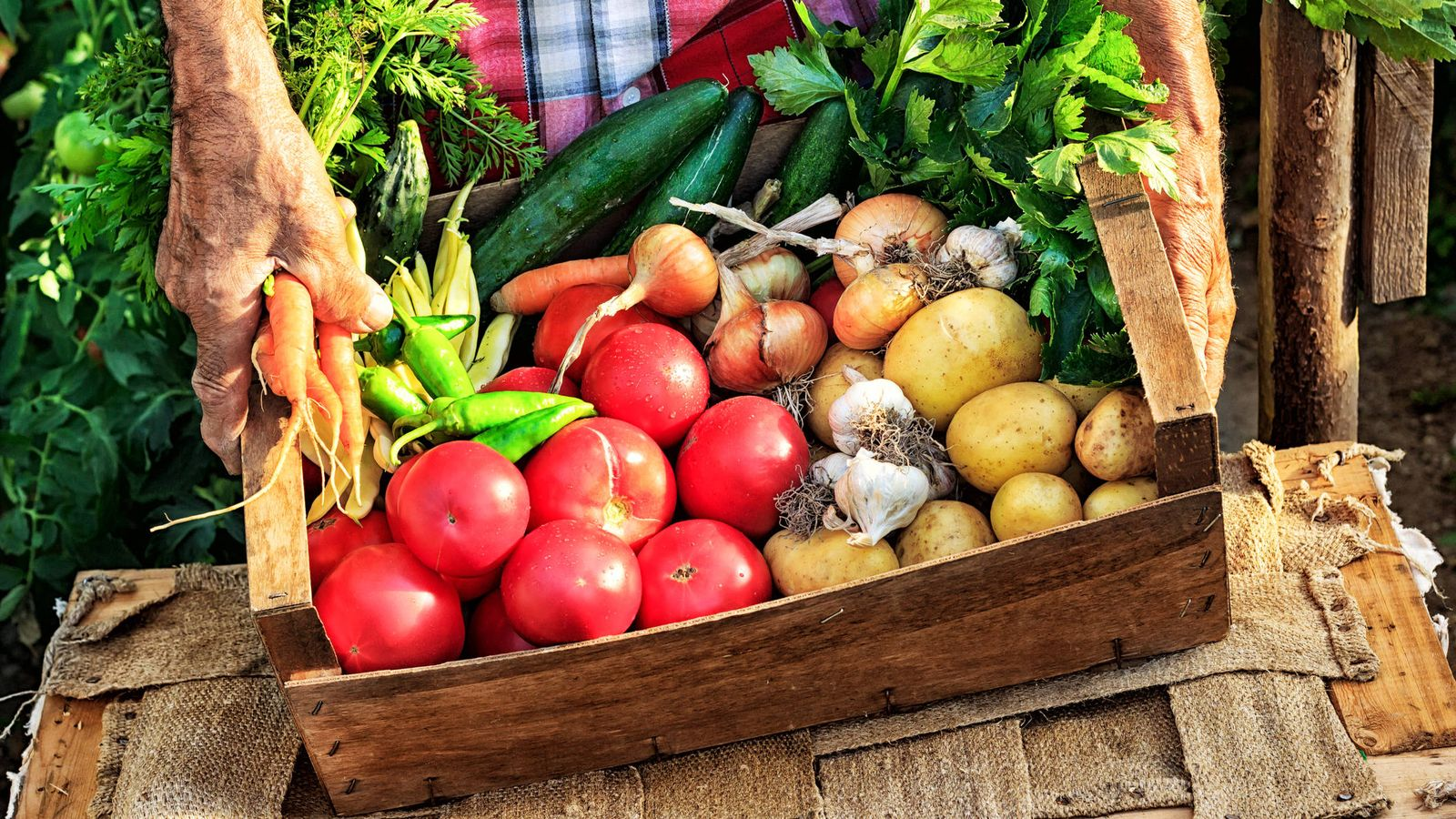 Foto: Saludables y aprovechan mejor los recursos. (iStock)