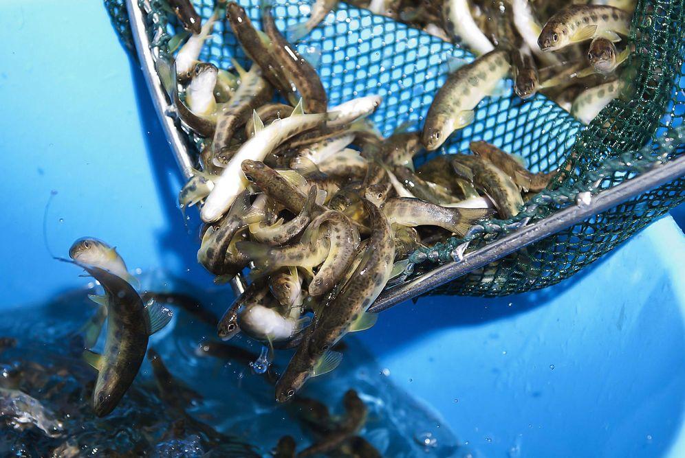 Foto: Poner coto a la pesca es la única alternativa para proteger el medio ambiente, recuerdan desde Ecologistas en Acción. (EFE)