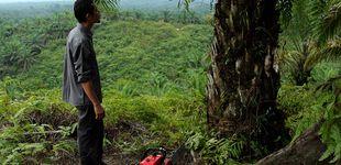 Post de El 'ecoguerrero' que busca salvar la selva de Indonesia con su motosierra