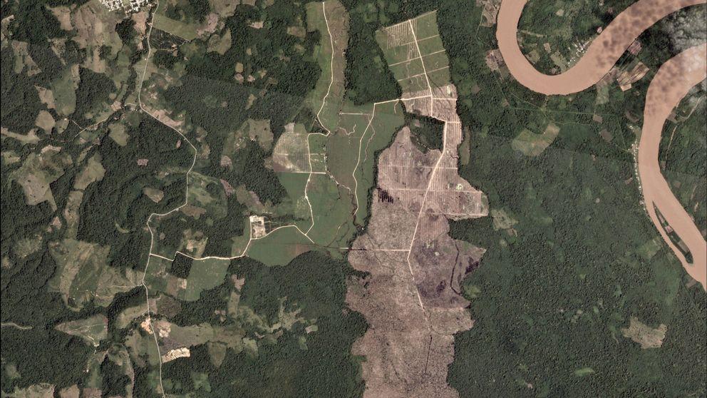 Estamos destruyendo el Amazonas a la velocidad más rápida de la última década