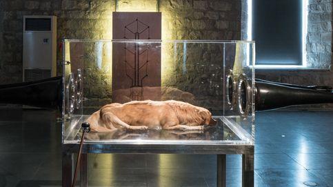 El MACBA exhibe a un perro muerto en una vitrina en una de sus exposiciones