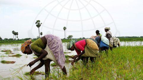 Manos Unidas invita a 'plantarle cara al hambre' ayudando a sembrar