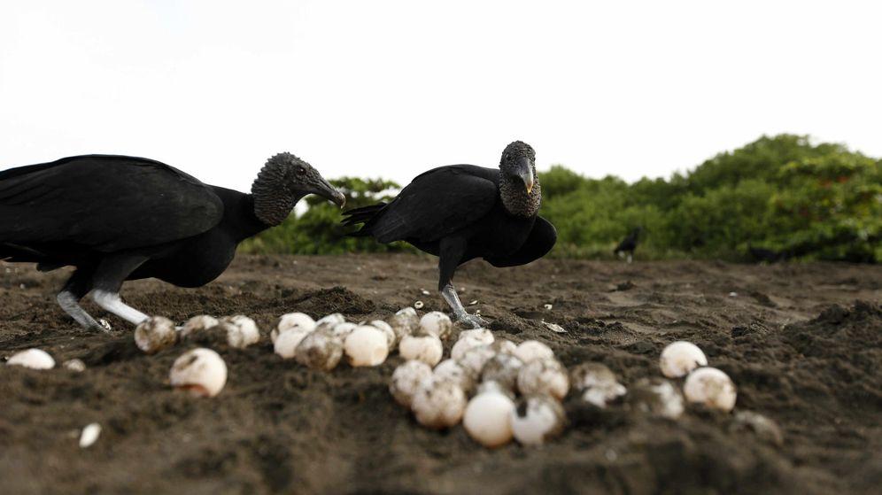 Foto: El veinte por ciento de los huevos analizados contenían restos de plásticos (EFE/Jeffrey Arguedas)