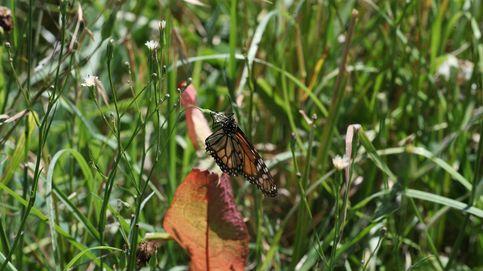 Los insectos y la maleza, aliados de la fruticultura