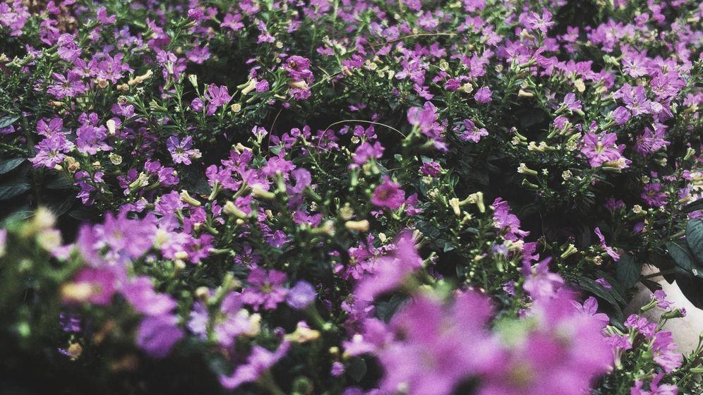 Foto: Las plantas se comunican cuando detectan peligro