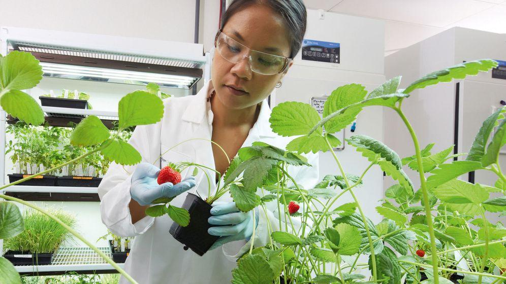 Foto: Robótica, genética y agricultura espacial, claves en lucha contra el hambre