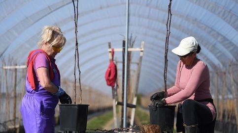 Españoles que no han pisado un huerto, al rescate del campo: Veremos si aguantan