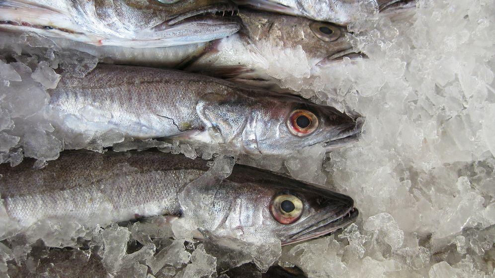 Foto: Pescados congelados para evitar el anisakis. (Flickr/Antony Theobald)