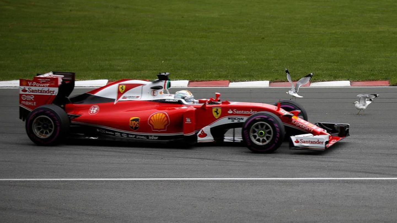 Vettel y las gaviotas. (Reuters)