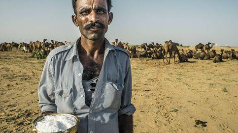 Los productos de leche de dromedaria se preparan para llegar al súper