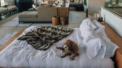 Camas nido, la mejor solución para colocar dos camas en un dormitorio