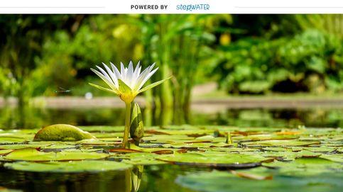 StepbyWater, la alianza del sector público y privado para cuidar y preservar el agua