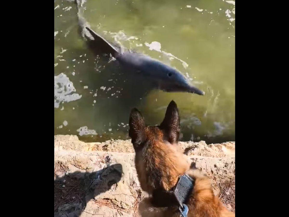 Foto: Mako disfrutó de lo lindo con sus nuevos amigos acuáticos (Facebook)