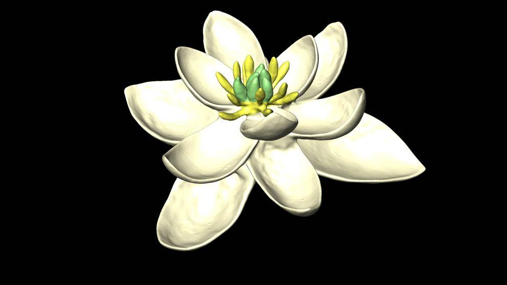 Así es la flor prehistórica de la que proceden todas las demás