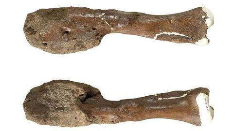 Descubren por primera vez un caso de cáncer en un hueso de dinosaurio