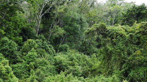 Casi 4 de cada 10 especies de plantas están en peligro de extinción por la crisis climática